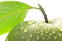 BioLOGISCHe voeding wint in discussie