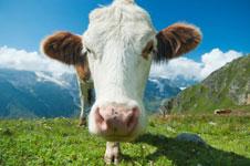 Wat overheidsonderzoek in jouw vlees heeft aangetroffen